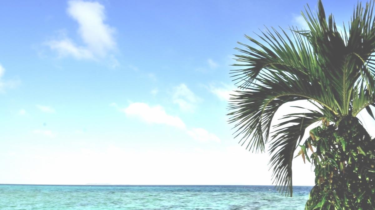 海とヤシの木壁紙 無料 高画質ダウンロード